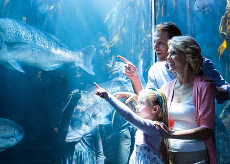 Family enjoying visit to Ripley's Aquarium of the Smokies in Gatlinburg Tn